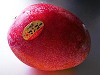 アーウィン 沖縄産 マンゴー